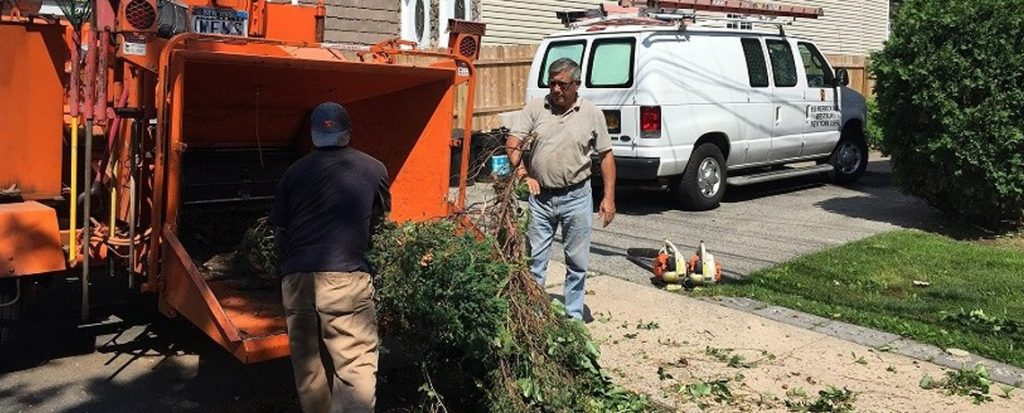 NYC Tree Removal | Tree Removal NYC