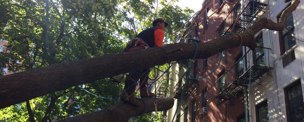 NYC Tree Services