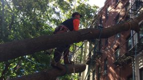NYC Tree Services