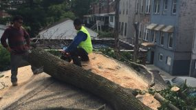 Tree Removal NYC