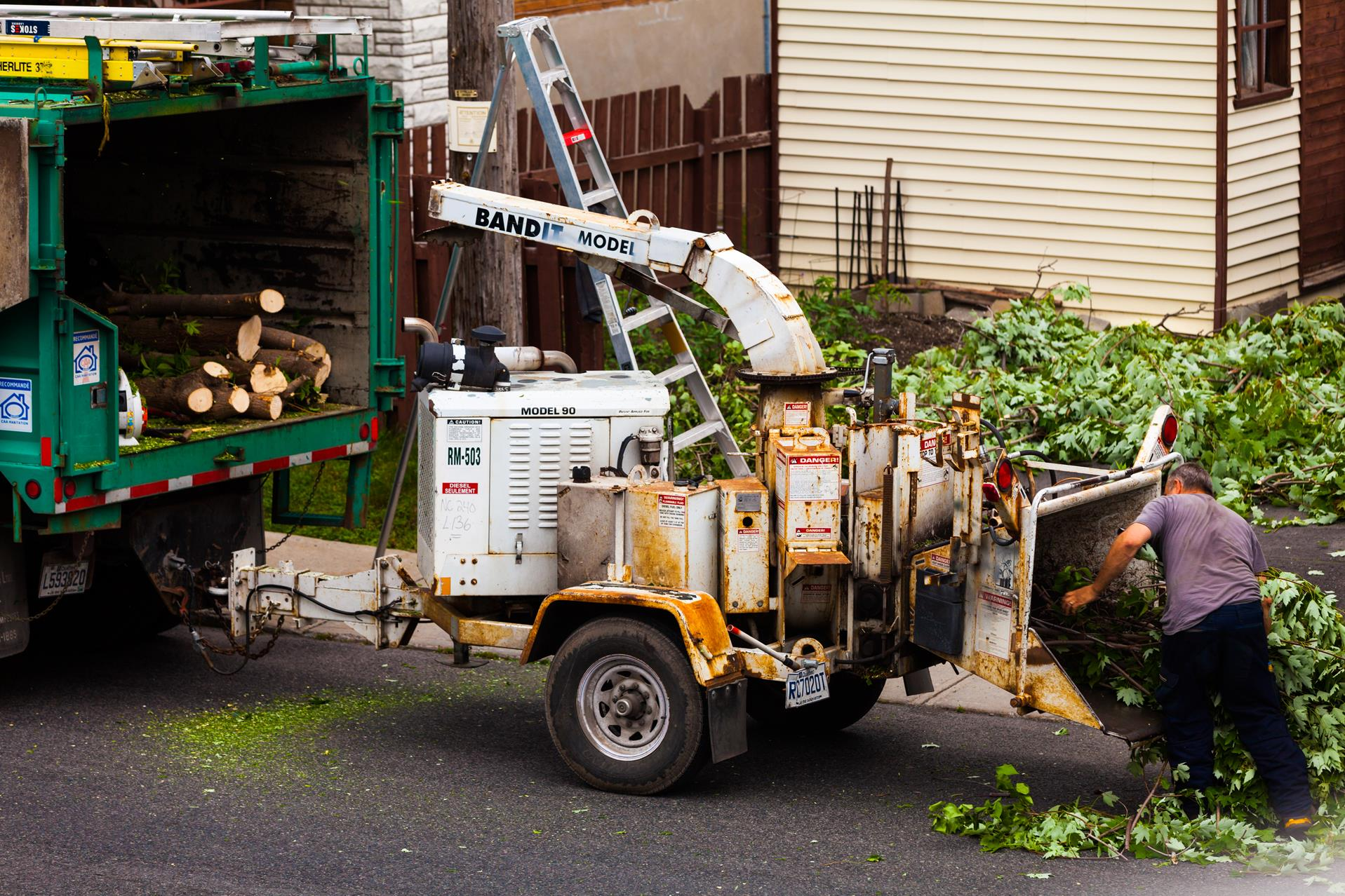nyc tree removal service near me