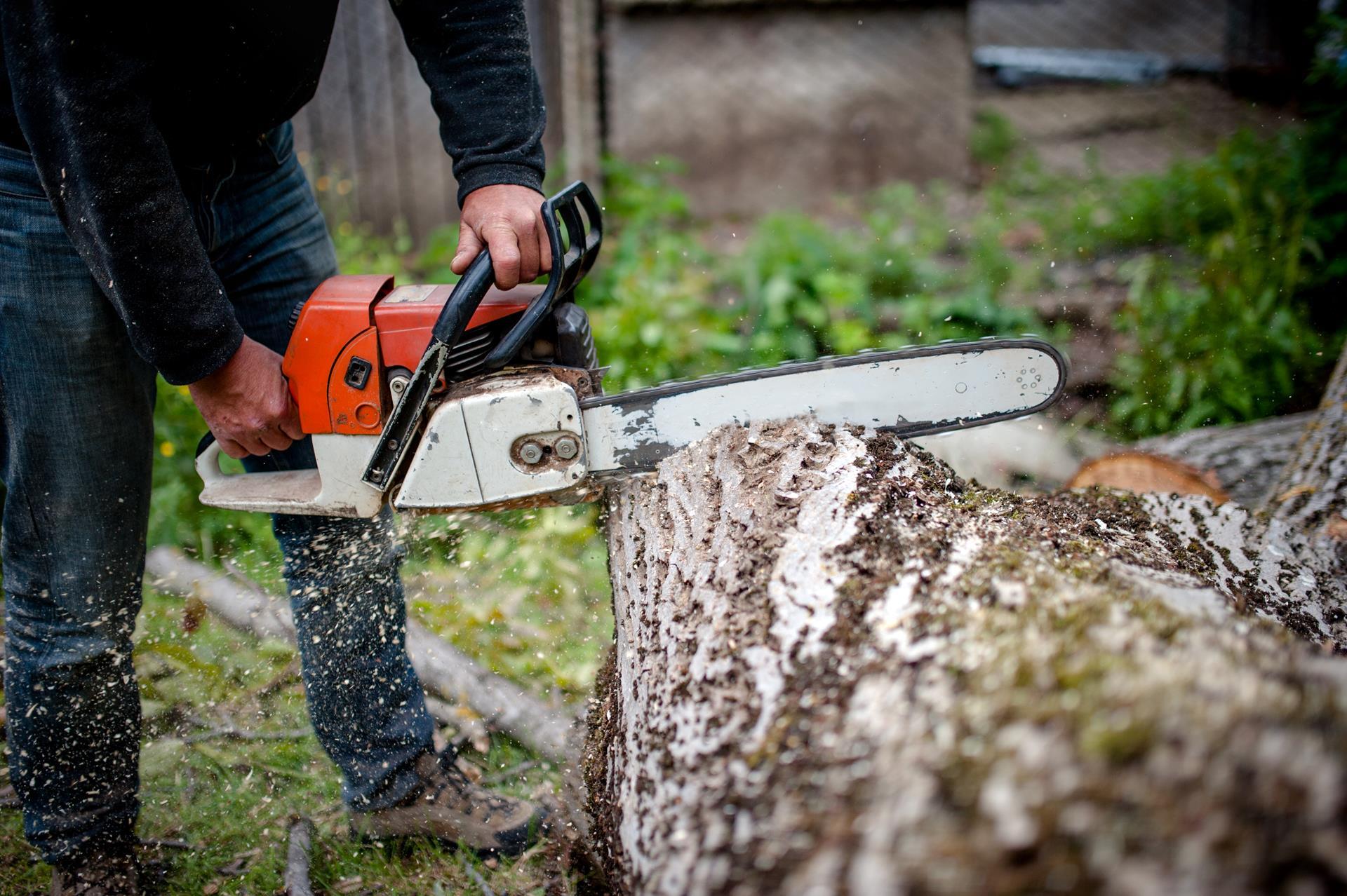 Bronx tree service near you